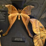 Papillons de l'immense collection d'insectes
